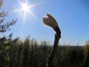 Flower Stretching Toward the Sun